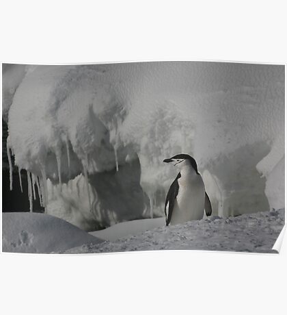 Antarctic Penguin Poster