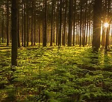 Woburn Forest Sunset by George Wheelhouse