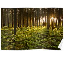 Woburn Forest Sunset Poster