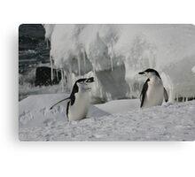 Penguin in pairs Canvas Print