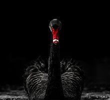 Black Swan - Low Key by George Wheelhouse