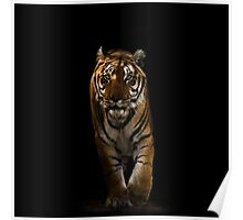 Bengal Tiger - Out Of The Black Poster
