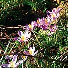 spring by Tigger