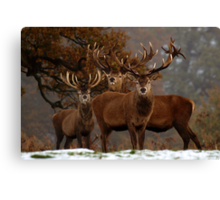 Family Portrait - Red Deer Canvas Print