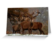 Family Portrait - Red Deer Greeting Card
