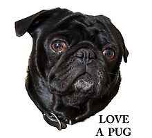 Black Pug face -  Love a Pug by Ilze Lucero