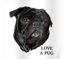 Black Pug face -  Love a Pug Poster