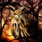 Night Owl by saleire