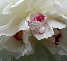 WHITE ROSE  by SofiaYoushi