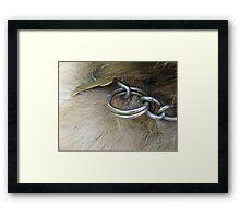 DOG COLLAR  Framed Print