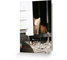 The Kittens: Take Me Home Greeting Card