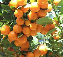 Hybrid Oranges by G. Patrick Colvin