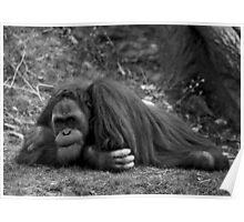 Orangutan #1: Boredom Poster