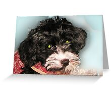 Rescue a Dog Today -  Havanese Greeting Card