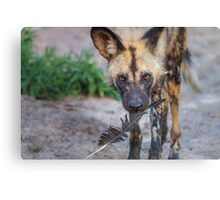 Wild Dog's Prized Feather Canvas Print