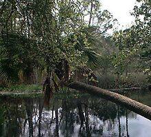 Fallen Palm by Junebug60