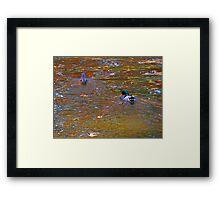 Enchanted Pond V   (1430118843VA) Framed Print