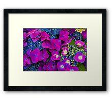 Streptocarpus Purple and Blue Bouquet  Framed Print