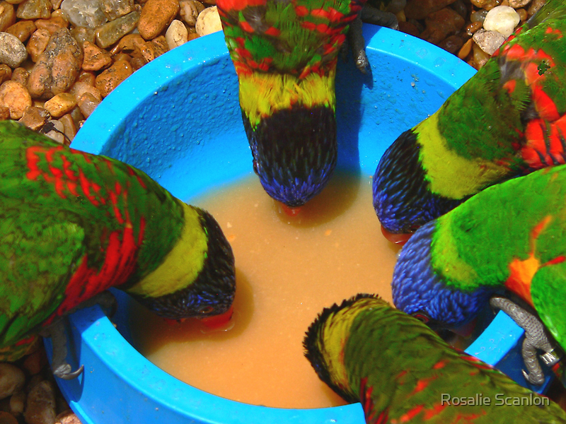 Splash of Color by Rosalie Scanlon
