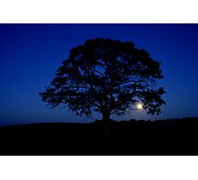 Moon rising over Lonely tree, Stewiacke Photographic Print