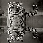 Tiger by tintinian