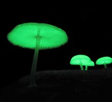 Magic Mushies (Share Life Collection) by Lachlan Kent