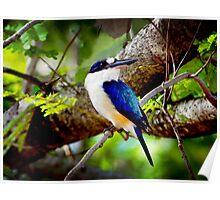 Little Kingfisher  Poster