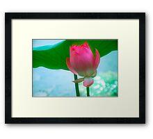 Lotus #28 Framed Print