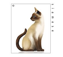 Cat Breeds: Siamese - White Background by Martine Carlsen