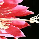 Hands from Heaven by DARRIN ALDRIDGE