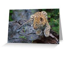 Leopard Cub Hideaway Greeting Card