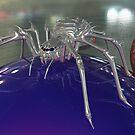 Spidernator by Terry Best