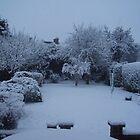 it's snowing  :) by jab03