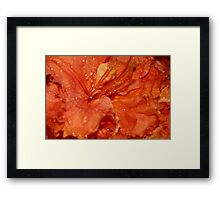 Orange Azalea Framed Print