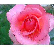 Rain Drops on Rose Photographic Print