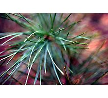 Spike Photographic Print