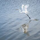 Snowy Egret in blue by Colleen Farrell