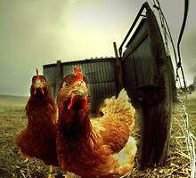 nobody here but us chickens ... by Dan Shalloe