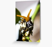 Insect King Greeting Card