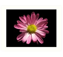 Chrysanthemum checkered Art Print