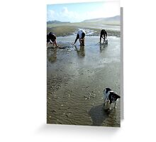 3 Men and a dog, New Zealand Greeting Card