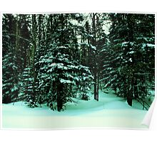 NC  Forest scenic too Poster