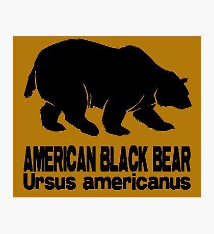 AMERICAN BLACK BEAR Photographic Print