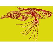 Freshwater butterflyfish Photographic Print