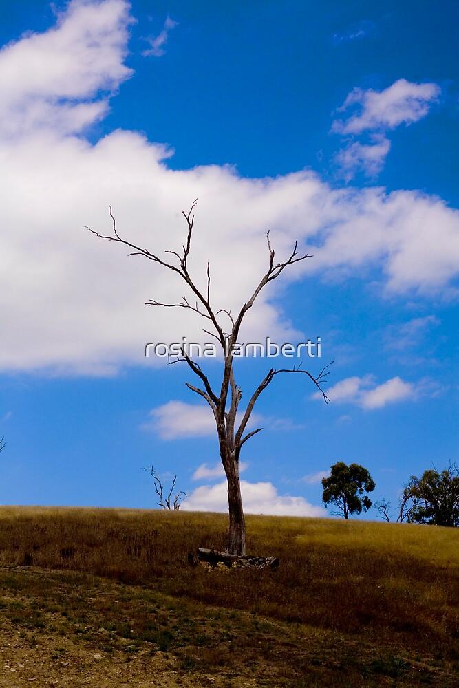 Lecacy of drought by Rosina  Lamberti