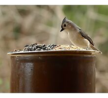 Tufted Titmouse posing for the handout. Photographic Print