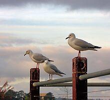 Waiting by the dock by SuzieCheree