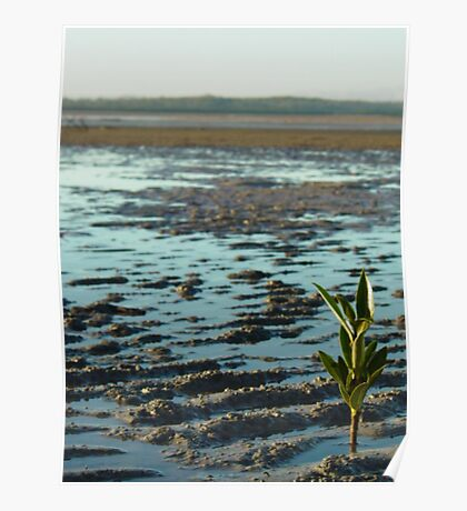 One Lone Mangrove Poster