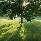 Morning Tree by babibell