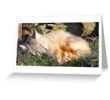 Corsac Fox (Sleeping) Greeting Card